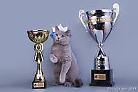 BEST KITTEN RUSSIA TOP CAT 2013