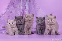 Все котята вместе!