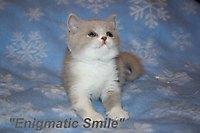 Dionis of Enigmatic Smile (живет у Елены, г. Саратов)