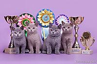 г. Ульяновск 17-18 авг 2013г., BEST LITTER (оба дня в конкуре), BEST LITTER of BREED