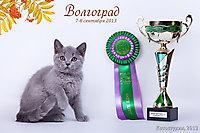 г. Волгоград 7-8 сент 2013г., Гоша Красавчик BEST KITTEN