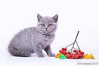 Нэшечки/Няшечки