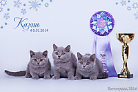 г. Казань BEST LITTER, BEST LITTER of BREED