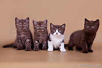 Котята вместе.