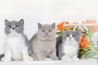 Все котята вместе.