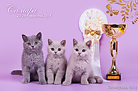 BEST LITTER г. Самара 23-24 авг 2014 г.