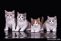 Все котята вместе:)