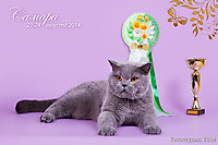 WCF ring NEUTER 1 place (10 cats) г. Самара 23-24 авг 2014 г.