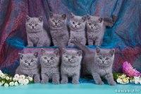 Все котята вместе