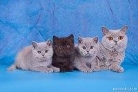 Котята все вместе, 2 мес.