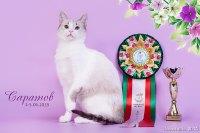 Лучший домашний Кот!